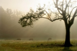 Meadow in the mist