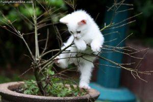 kitten_tree_climb